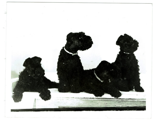 The Water Dogs